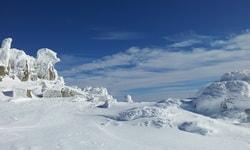 Основное о зимовке в теплых странах