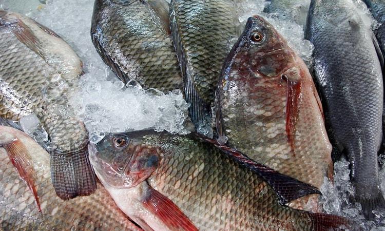 Десять дней на Бали мы посвятили изучению полуострова Букит и, конечно, побывали на известном рыбном рынке в Джимбаране. Мы о нём были наслышаны и давно мечтали