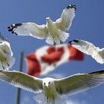 Эмиграция в Канаду. Помощь в эмиграции в Канаду из России