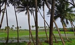 Курорт Морджим (Morjim) Гоа, Индия
