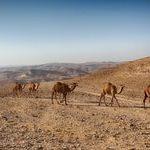 Арад, город мечта астматика в Израиле